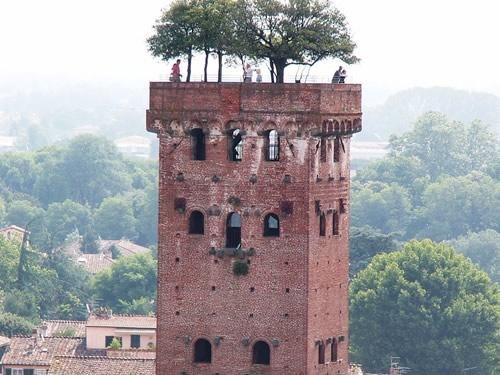 torre guinigi lucca foto